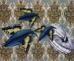 2008- Papilio megaptera. olio su tela - 50x60