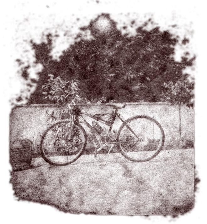 la-bicicletta-seppia