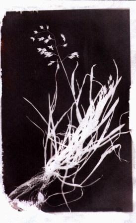 annerimento diretto su carta al cloruro d'argento